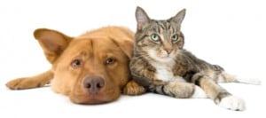 Calgary Condo Guide to Pets