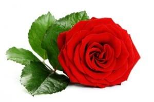 rose thai garden calgary