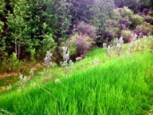 Deer at Edgemont Ravine Calgary Parks